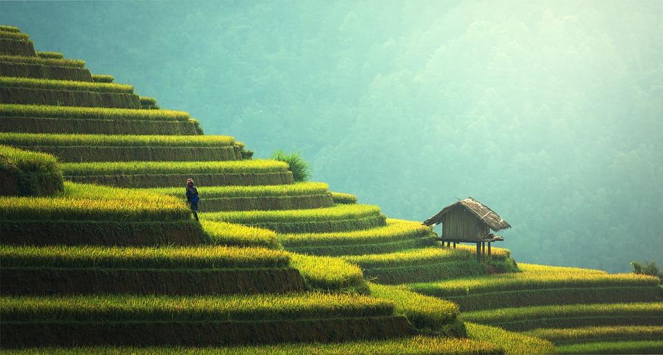 Opiniones sobre viaje a Vietnam y Camboya