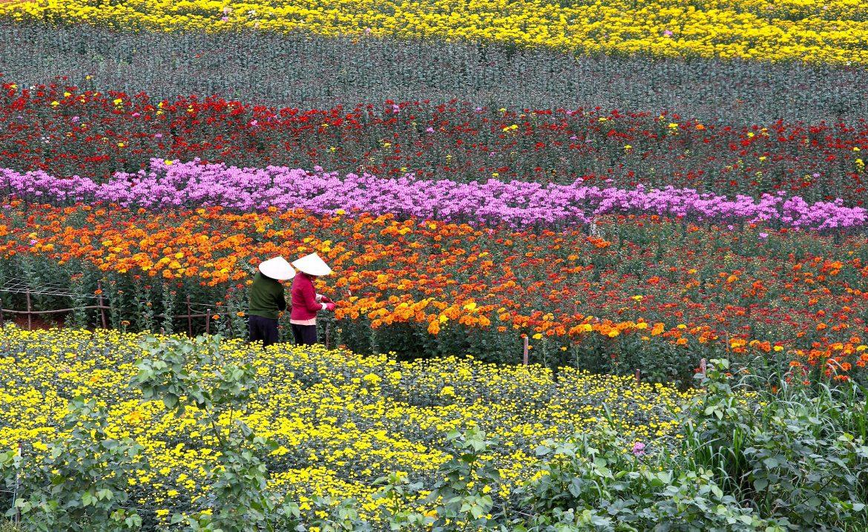 Jardín de flores en dalat vietnam