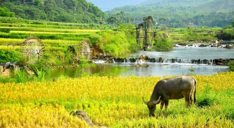 pu luong - Hacer excursiones en Vietnam