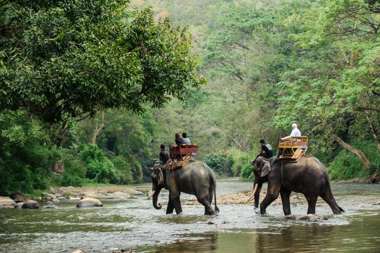 Las mejores experiencias de aventura en Tailandia - elephant trekking