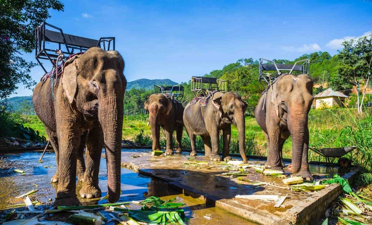 Viaje de aventura en Vietnam y Camboya